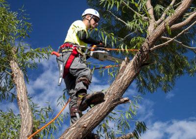 tree-felling-2