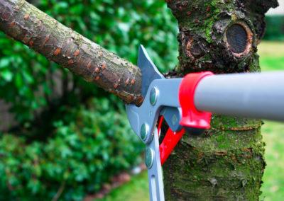 tree-felling-3